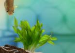 Ecotossicologia, salute e sostenibilità ambientale: al via il corso di perfezionamento