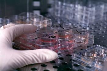 cellule-staminali-350x233